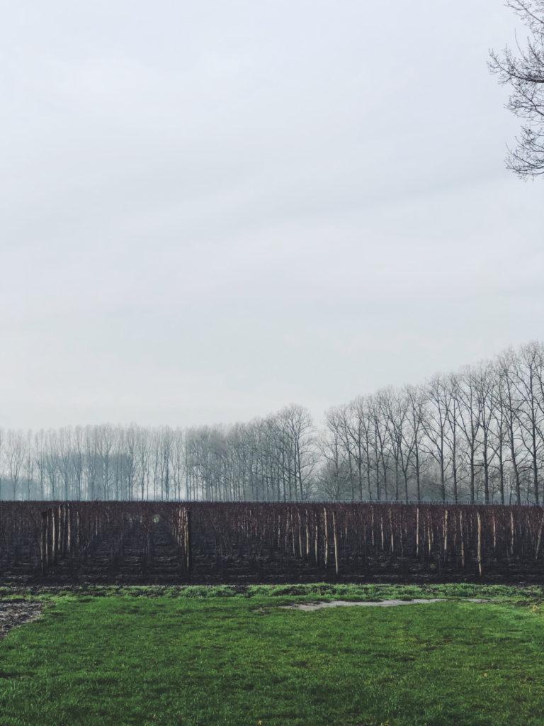 la bellezza delle vigne in Belgio dove i climi freddi da limite diventano punto di forza